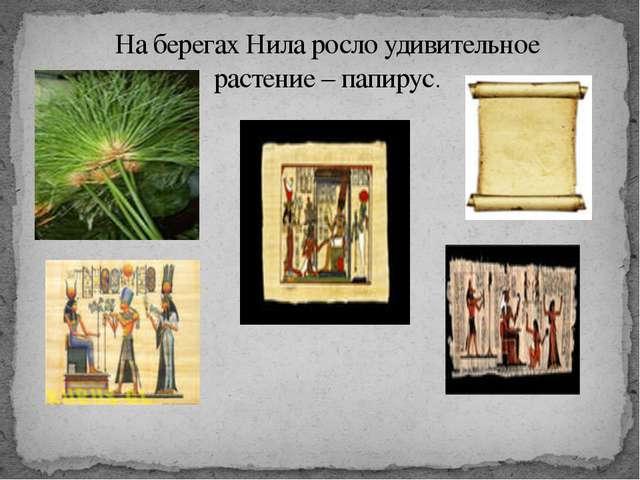 На берегах Нила росло удивительное растение – папирус.