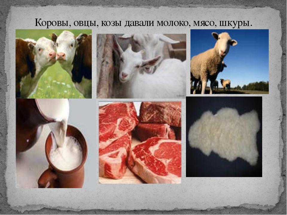 Коровы, овцы, козы давали молоко, мясо, шкуры.