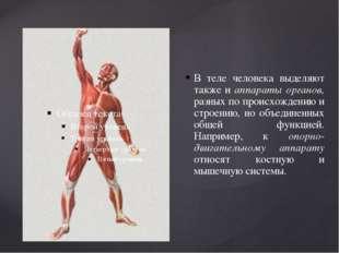 В теле человека выделяют также и аппараты органов, разных по происхождению и