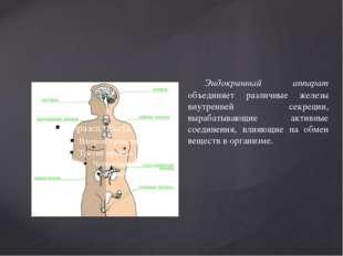 Эндокринный аппарат объединяет различные железы внутренней секреции, вырабат