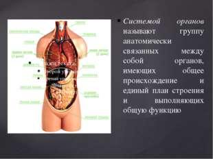 Системой органов называют группу анатомически связанных между собой органов,