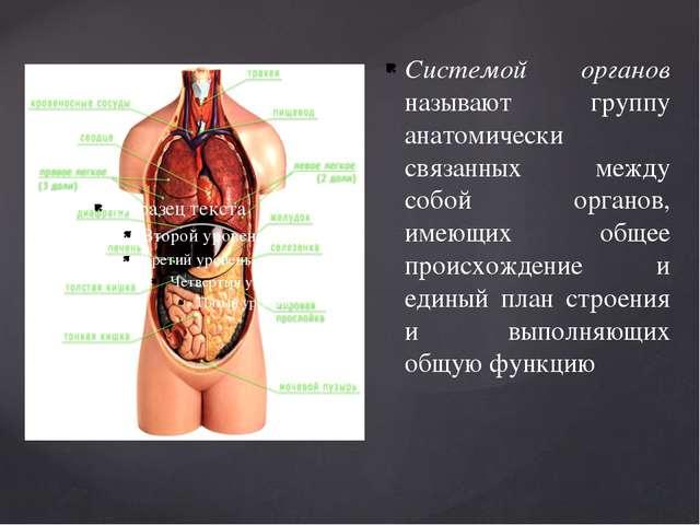 Системой органов называют группу анатомически связанных между собой органов,...