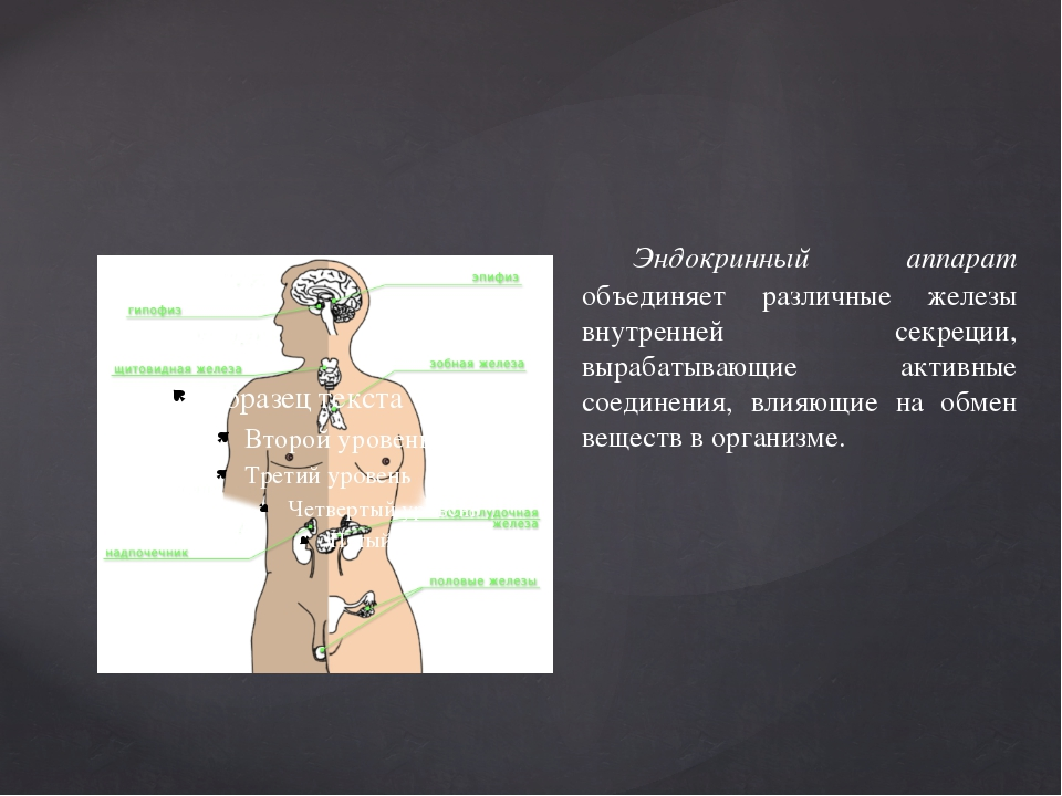 Эндокринный аппарат объединяет различные железы внутренней секреции, вырабат...