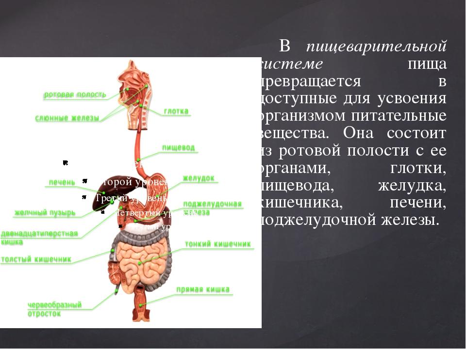 В пищеварительной системе пища превращается в доступные для усвоения организ...