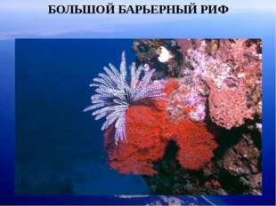 БОЛЬШОЙ БАРЬЕРНЫЙ РИФ Но Большой барьерный риф – это самая большая рифовая си