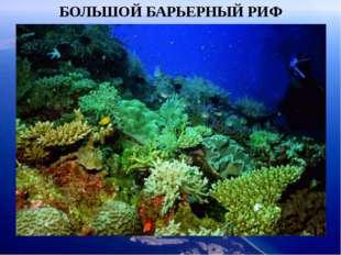БОЛЬШОЙ БАРЬЕРНЫЙ РИФ Неповторимое зрелище ждет Вас в подводном мире островов
