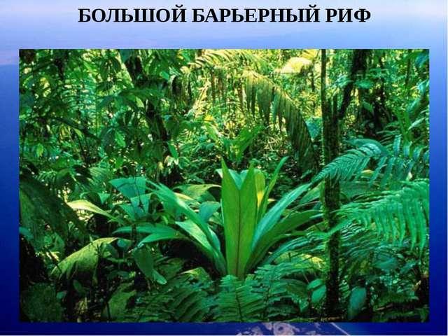 БОЛЬШОЙ БАРЬЕРНЫЙ РИФ Ожерелье островов простирается на 2000 км от Папуа - Но...