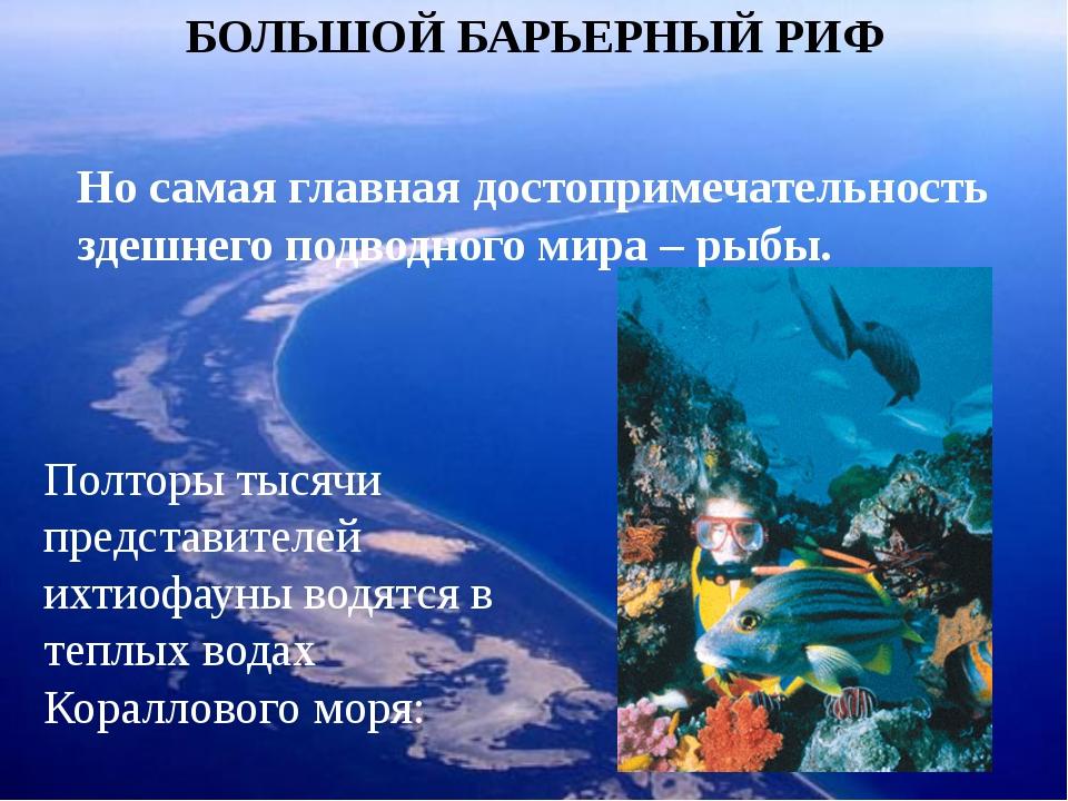 БОЛЬШОЙ БАРЬЕРНЫЙ РИФ Но самая главная достопримечательность здешнего подводн...