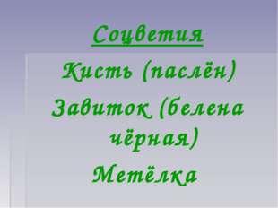 Соцветия Кисть (паслён) Завиток (белена чёрная) Метёлка
