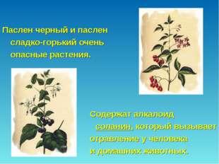 Паслен черный и паслен сладко-горький очень опасные растения.