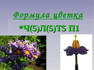 Формула цветка *Ч(5)Л(5)Т5 П1