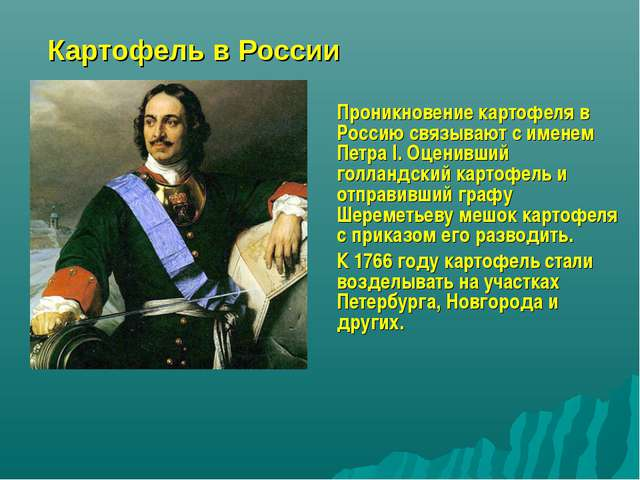 Картофель в России Проникновение картофеля в Россию связывают с именем Петра...