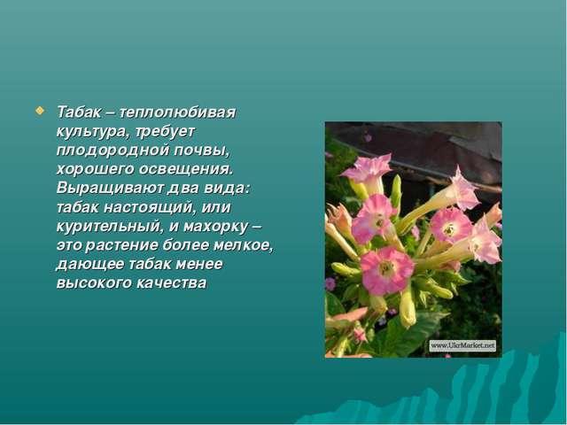 Табак – теплолюбивая культура, требует плодородной почвы, хорошего освещения....