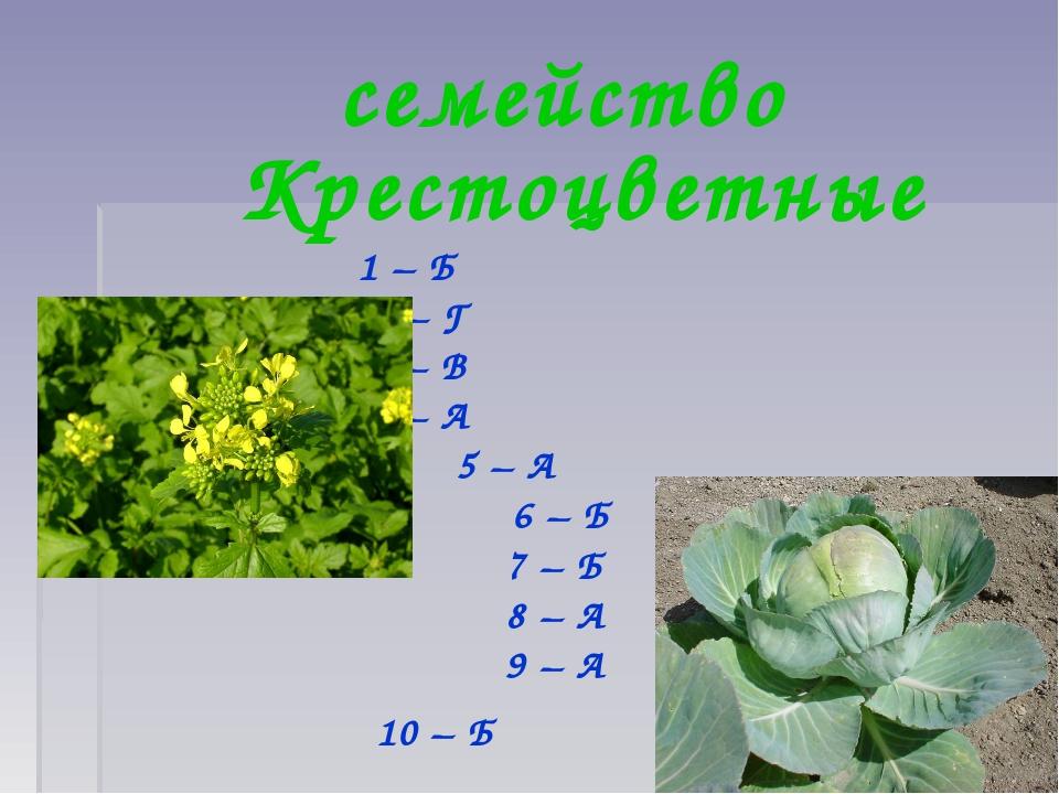семейство Крестоцветные 1 – Б 2 – Г 3 – В 4 – А 5 – А 6 – Б 7 – Б 8 – А 9 – А...