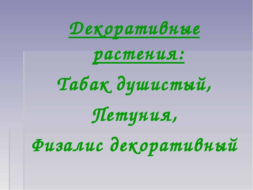 Декоративные растения: Табак душистый, Петуния, Физалис декоративный
