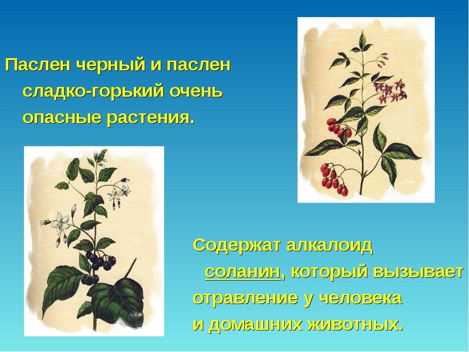 Паслен черный и паслен сладко-горький очень опасные растения....