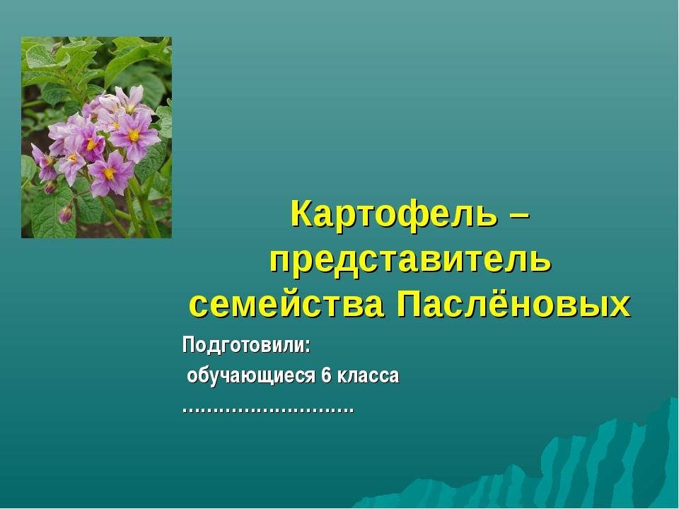 Картофель – представитель семейства Паслёновых Подготовили: обучающиеся 6 кла...