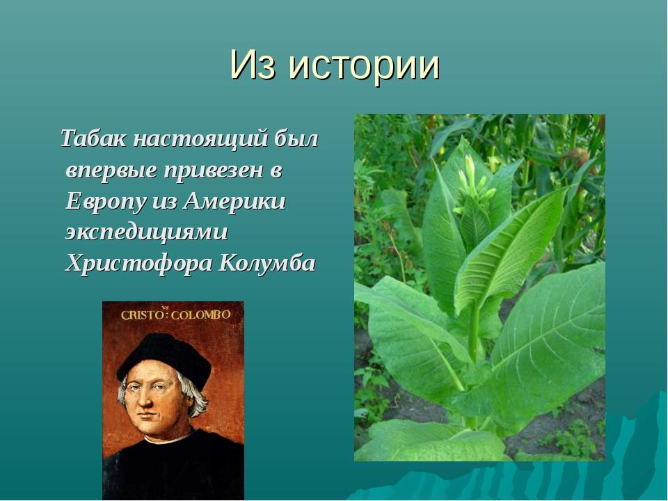Из истории Табак настоящий был впервые привезен в Европу из Америки экспедици...