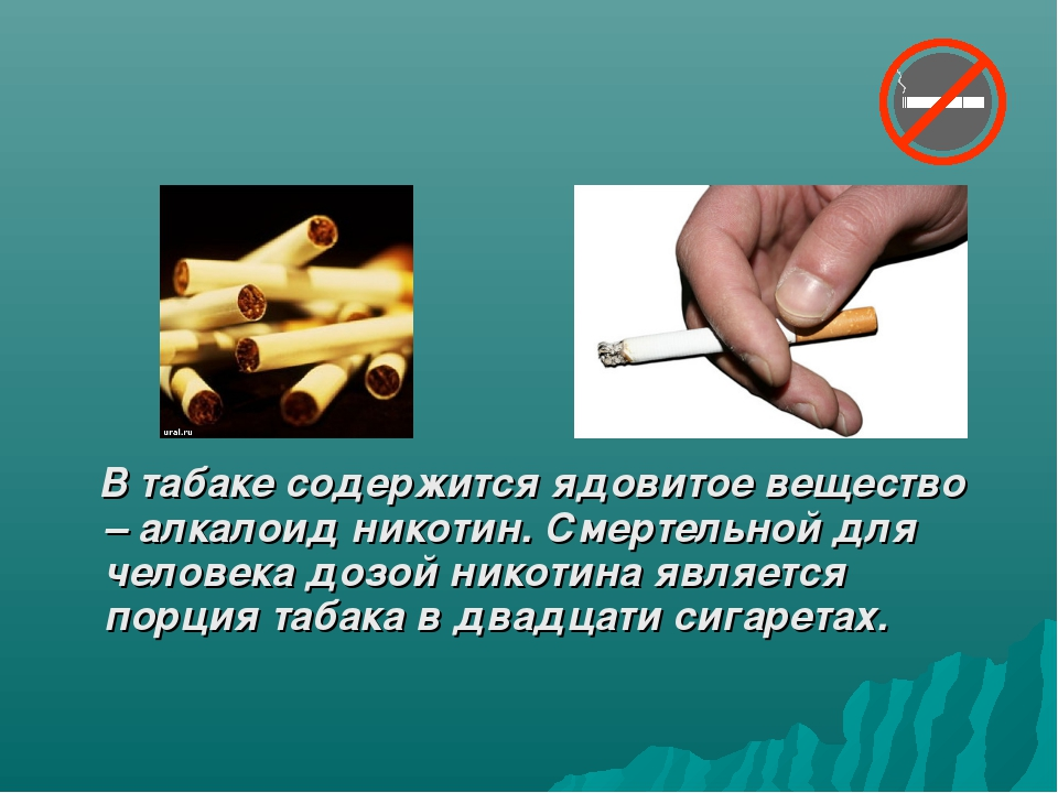 В табаке содержится ядовитое вещество – алкалоид никотин. Смертельной для че...