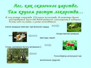 Лес, как сказочное царство, Там кругом растут лекарства… В лесу растут лекарс
