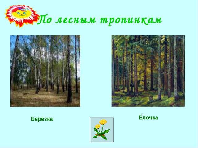 По лесным тропинкам Ёлочка Берёзка