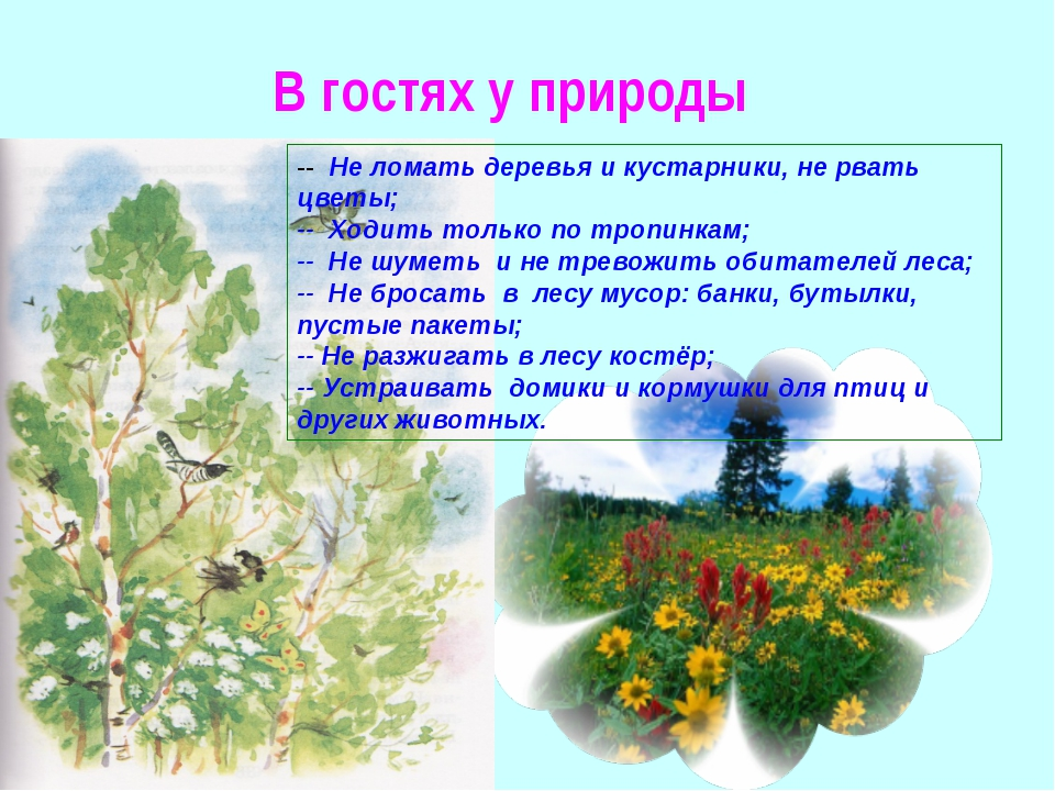 В гостях у природы -- Не ломать деревья и кустарники, не рвать цветы; -- Ходи...