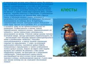 клесты У клестов все не так, как у других птиц. Во-первых, они не имеют посто