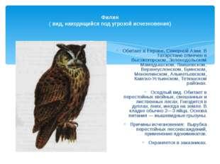 Филин ( вид, находящийся под угрозой исчезновения) Обитает в Европе, Северно