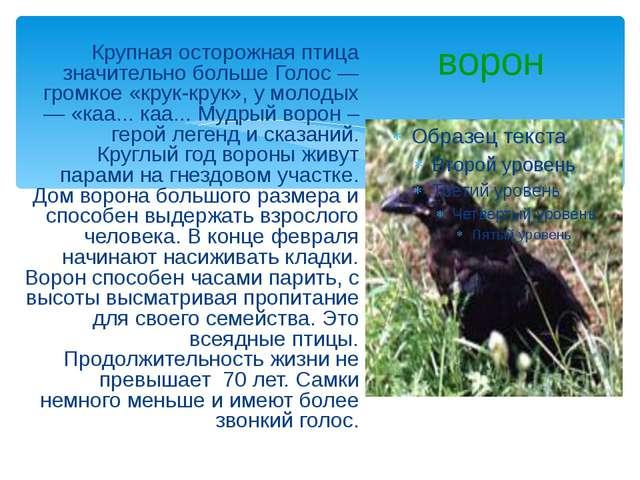 ворон Крупная осторожная птица значительно больше Голос — громкое «крук-крук»...