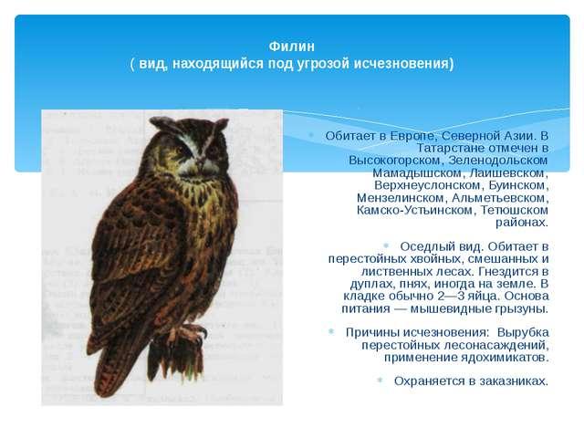 Филин ( вид, находящийся под угрозой исчезновения) Обитает в Европе, Северно...