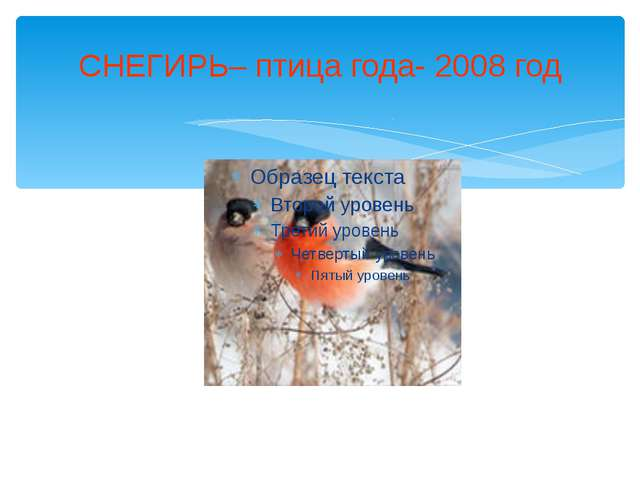 СНЕГИРЬ– птица года- 2008 год