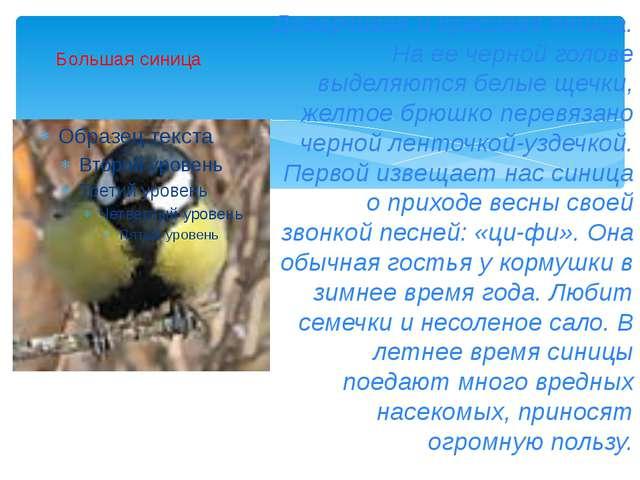 Большая синица Доверчивая и красивая птица. На ее черной голове выделяются бе...