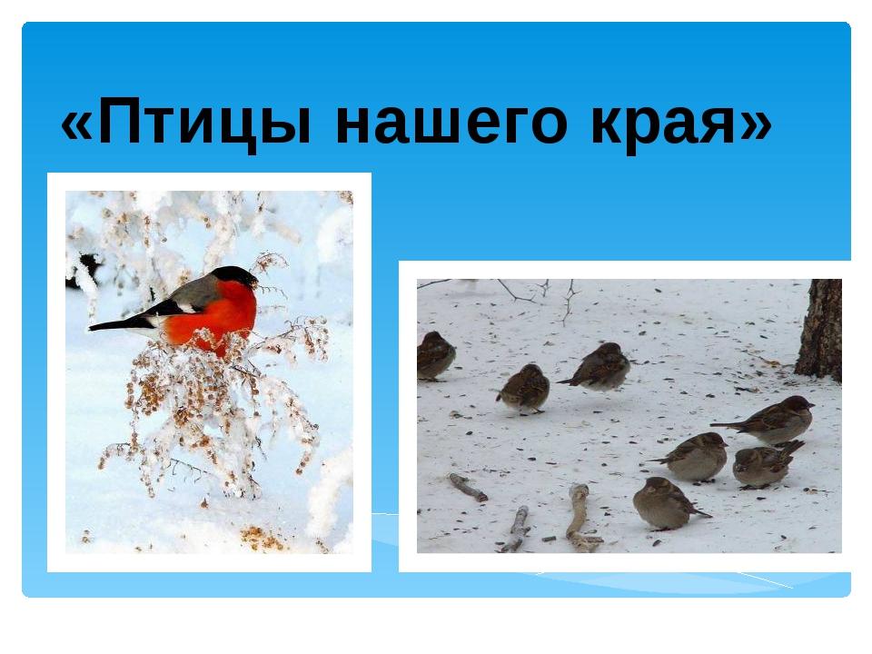 «Птицы нашего края»