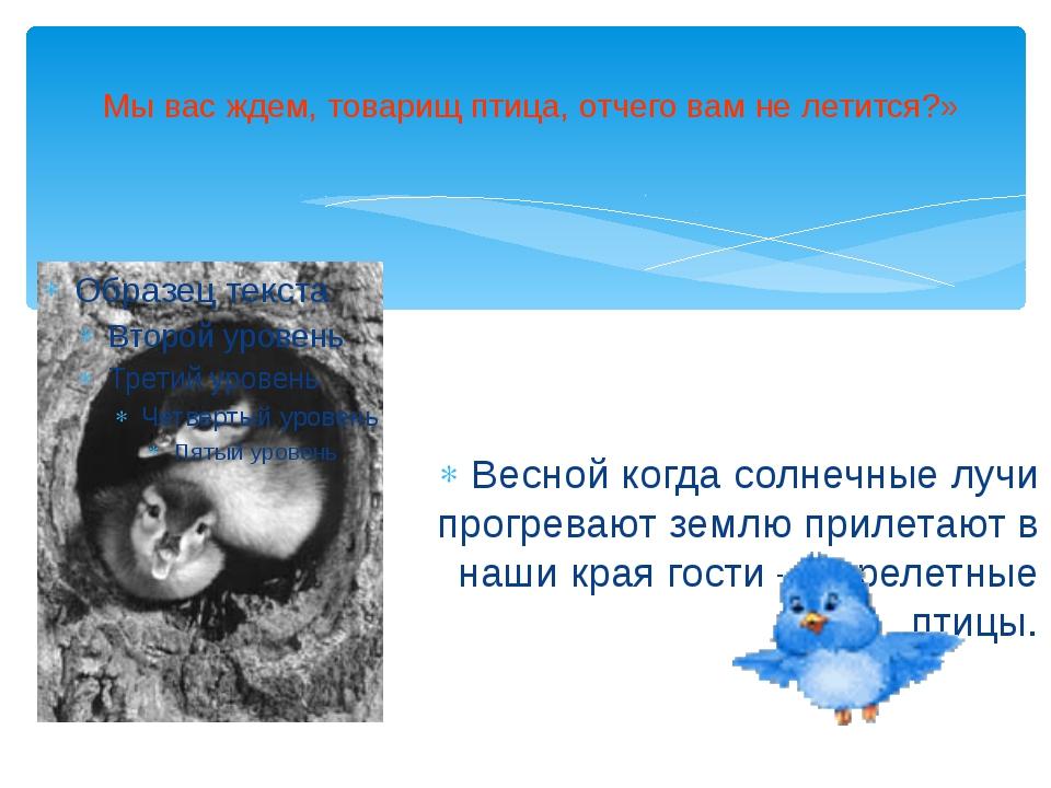 Мы вас ждем, товарищ птица, отчего вам не летится?» Весной когда солнечные л...