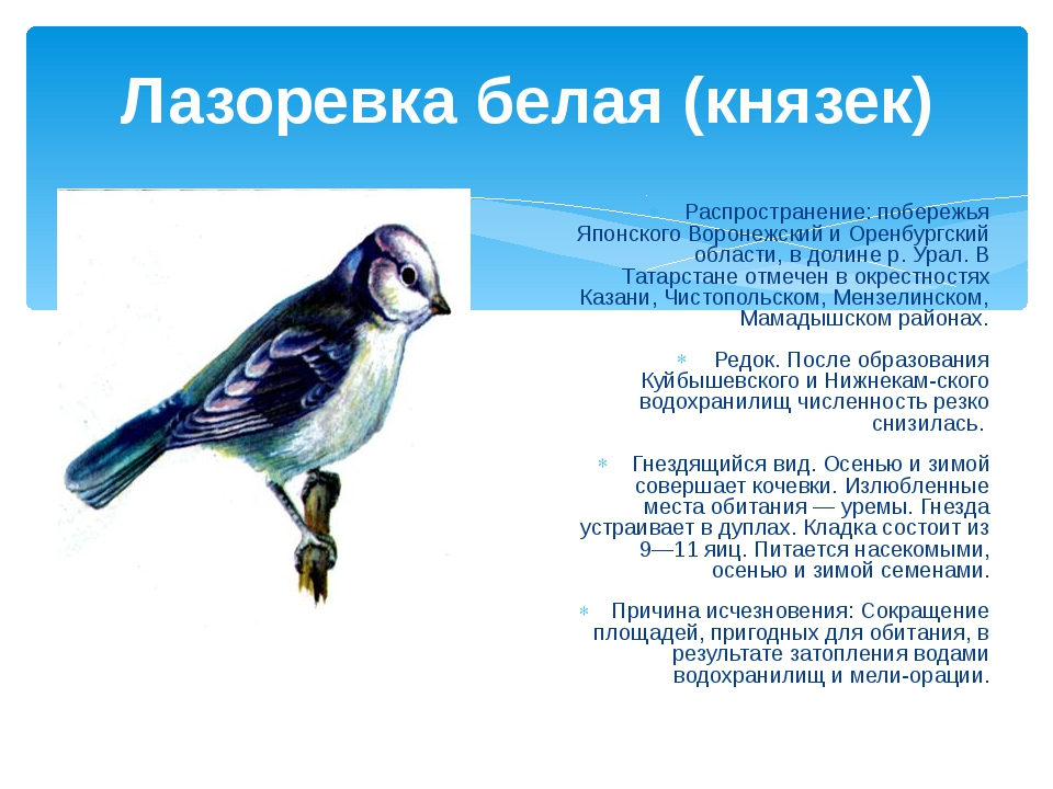 Лазоревка белая (князек) Распространение: побережья Японского Воронежский и О...