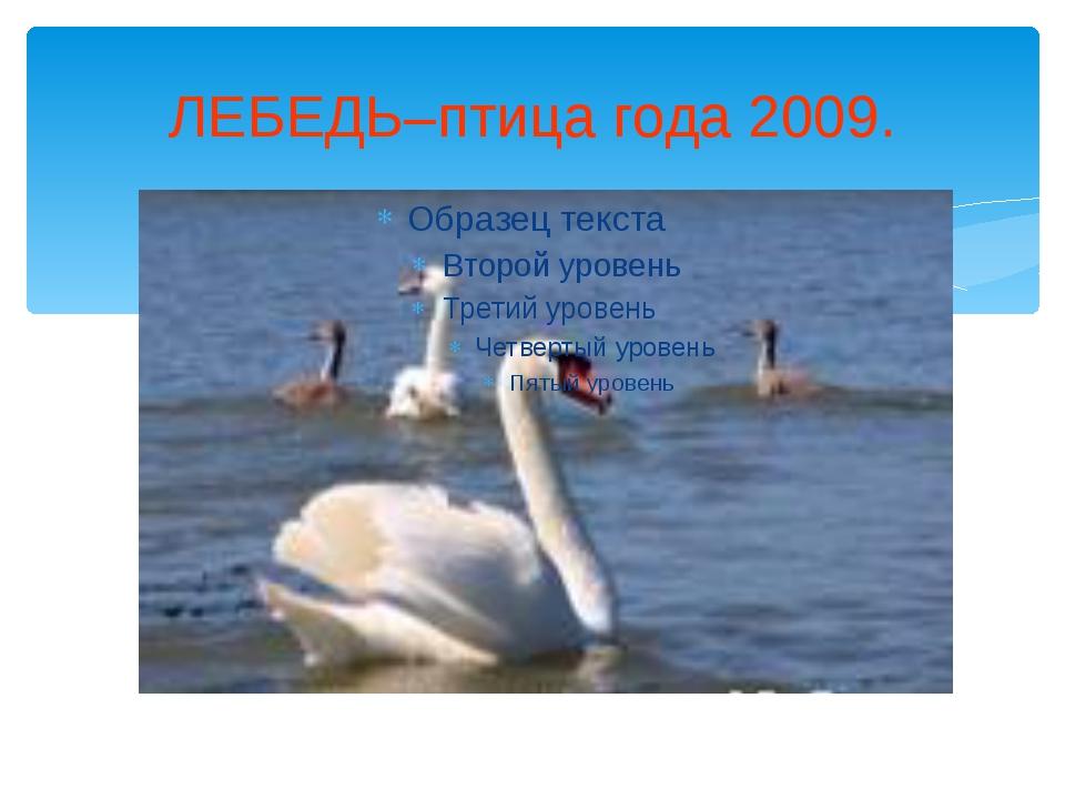 ЛЕБЕДЬ–птица года 2009.