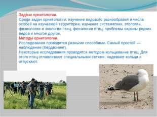 Задачи орнитологии. Среди задач орнитологии: изучение видового разнообразия и