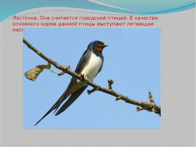 Ласточка. Она считается городской птицей. В качестве основного корма данной п...