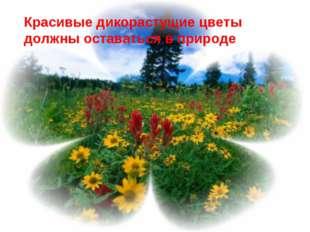 Красивые дикорастущие цветы должны оставаться в природе