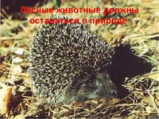 Лесные животные должны оставаться в природе