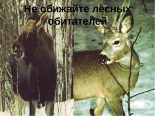 Не обижайте лесных обитателей