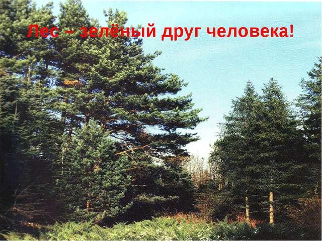 Лес – зелёный друг человека!