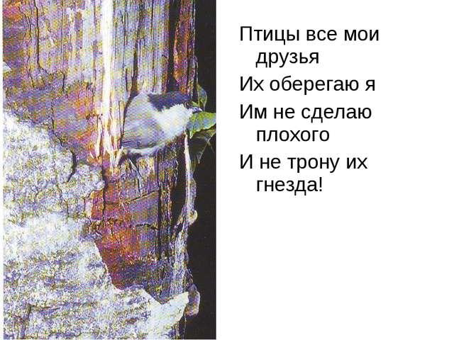 Птицы все мои друзья Их оберегаю я Им не сделаю плохого И не трону их гнезда!