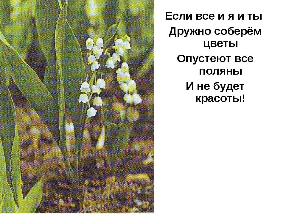 Если все и я и ты Дружно соберём цветы Опустеют все поляны И не будет красоты!