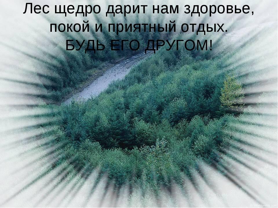 Лес щедро дарит нам здоровье, покой и приятный отдых. БУДЬ ЕГО ДРУГОМ!
