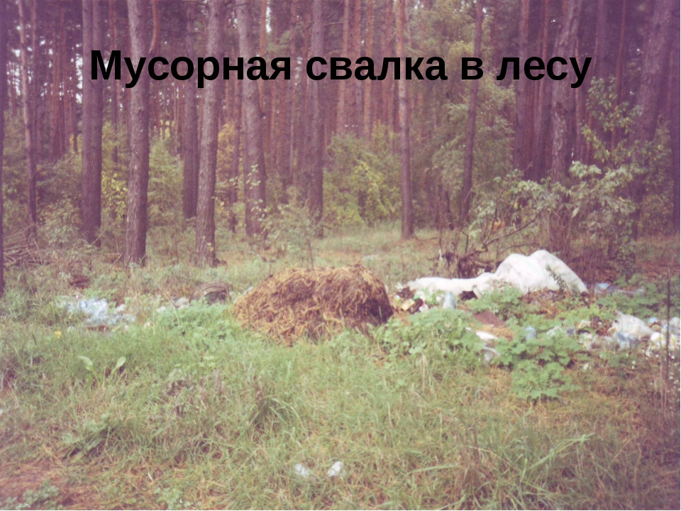 Мусорная свалка в лесу