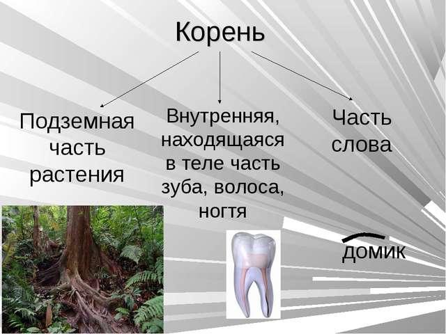 Корень Подземная часть растения Внутренняя, находящаяся в теле часть зуба, во...