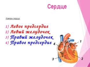 Камеры сердца: Левое предсердие Левый желудочек Правый желудочек Правое пред