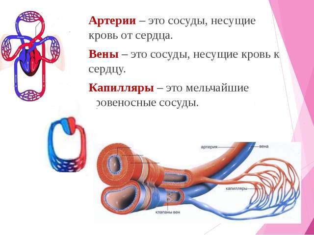 Артерии – это сосуды, несущие кровь от сердца. Вены – это сосуды, несущие кро...