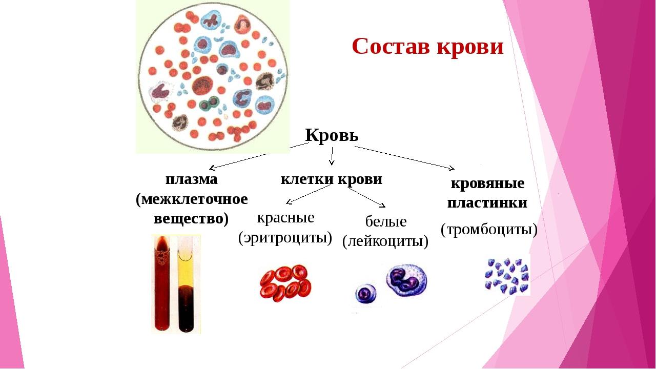Состав крови Кровь кровяные пластинки клетки крови плазма (межклеточное вещес...